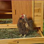XXL Chicken Coop Henhouse Rabbit Cage Hutch Chickens Shed Animal Stall Pic:4