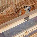 4 Etagen Kleintierstall  Mäusekäfig aus Holz Pic:4