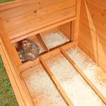 Hühnerhaus mit Brutkasten aus Holz Pic:4